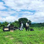 夏前の最期の蜂蜜を収穫しました^_^