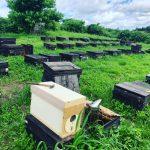 花粉交配用ミツバチを出荷しました😃