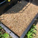 ミツバチの為に水飲み場を設置しました👌