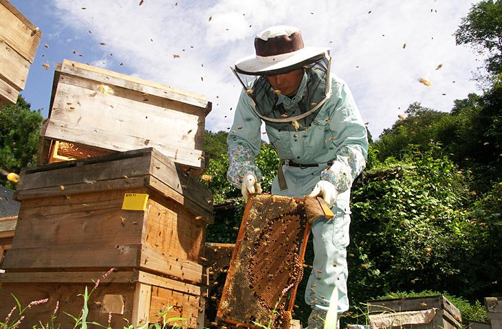 福島県 二本松市 渡辺養蜂場